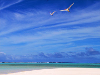 birds in the Aitutaki Lagoon